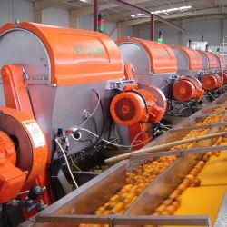 Frutos de sumo de laranja da linha de produção / suco máquina de enchimento / suco de laranja planta de processamento