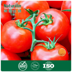 Natural de alta calidad de pigmento licopeno de tomate (extracto)