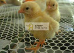 بلاستيك انبثق شبكة/شبكة بلاستيكيّة مسطّحة يستعمل لأنّ دواجن, بطّ, دجاجة