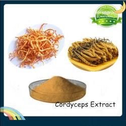 Polysacchariden 30% van het Uittreksel van Cordyceps Sinensis van de Levering van de fabriek