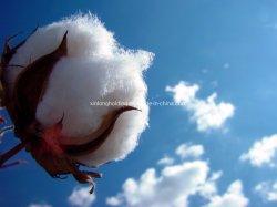 Prix plus bas en coton naturel tissu non tissé