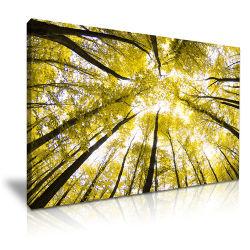 Preiswertes The Autumn Trees Canvas Art Prints für Home Decoration