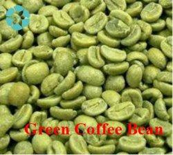 공급 자연적인 유기 녹색 커피 콩 추출/50% Chlorogenic 산