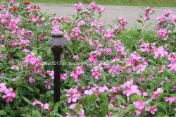 Heiß-Verkauf LED Lampe der Straßenlaterne-im Freien Garten-Beleuchtung-Verlegenheits-G4