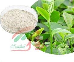 草のエキスの緑茶のエキスの有効成分のエピカテキンの (EC)増加筋肉