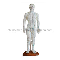 50cm Menschen-Akupunktur-Modell für Ausbildungs-unterrichtendes Modell mit Acupoints