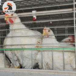 3 Tiers A-type batterij broiler Cage & Chicken Coops Gebruikt in de pluimveeteelt