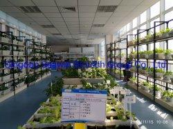 La agricultura natural puro fertilizante orgánico Extracto de Algas Marinas algas 6000 para las cosechas del campo