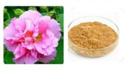 Fabrik-Zubehör-Qualitäts-Hibiscus-Blumen-Auszug