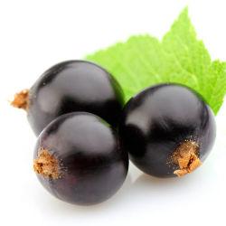 CAS No. 84082-34-8 100% 자연적인 까막까치밥 나무 씨 기름