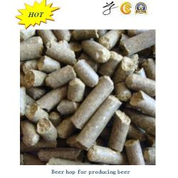 Houblon parfumé de bière pour produire la bière