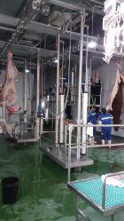 Linha de abate de bovinos para abate Halal Equipamento de talho