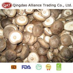 Hochwertiger gefrorener vollständiger Shiitake-Pilz