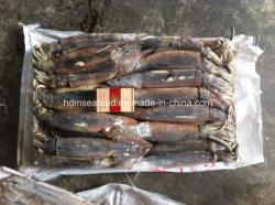 高品質のシーフードによってフリーズされる魚のアルゼンチンのイカ