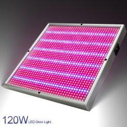 Meilleure vente ebay panneau LED 120W prix bon marché croître la lumière