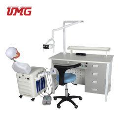 Simulazione medica utilizzata per lo strumento di insegnamento dei denti