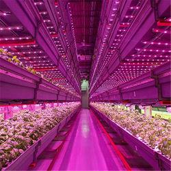 T8 à spectre complet bleu/rouge 8W/12W/15W/16W/18W/20W/22W/36W/40W/60 Watt 2FT/3FT/4FT/5FT/6FT/8FT Plante croître tube lumineux à LED pour l'usine