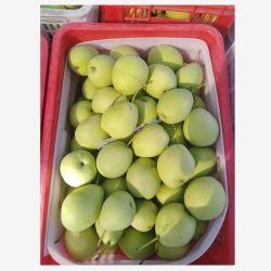 2020 새로운 작물 고수준 Shandong 녹색 배