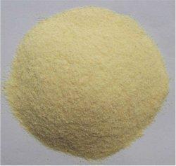 Cultivo fresco de excelente calidad ajo en polvo deshidratada