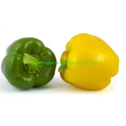 中国からの普及した新鮮な野菜