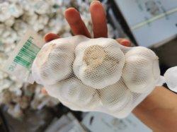 Chinese Shandong het Hete Plantaardige Verse Witte Knoflook 5.0cm+ van het Knoflook van de Aard Fersh
