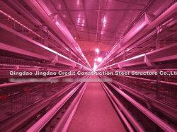 Organisation mondiale de l'équipement moderne étonnant Eight-Layer Volaille Maison de la Volaille Poulet Poulet de chair ferme chambre Chambre de la couche d'oeufs