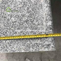 G602 nam de Witte Rechte Stap van het Graniet met Halve Rand Bullnose toe