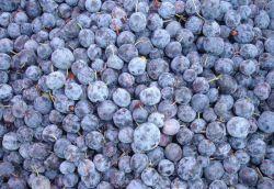 バルクフルーツ IQF 新鮮な冷凍のブルーベリー