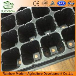 Las semillas para el Banco de la bandeja de sistema utilizado en el cine de plántulas de tomate de invernadero