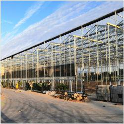 La estructura de acero galvanizado en caliente Venta/agricultura comercial/Granja/Jardín Casa Verde Multi Span PC policarbonato de hoja verde vegetal de casas/flor
