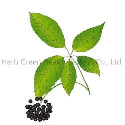 Estratto di pianta naturale estratto di Ginseng Siberiano organico (Acanthopanax Senticosus) (Eleutherococcus Senticosus) con Eleutherosides (B+e) >0.1% Erba