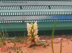 신식 강철 위원회 녹색 식물 담