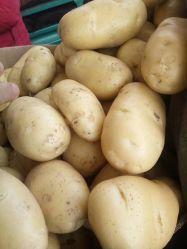 البطاطا الهولندي الجديد الطازج المجمد من هولندا من الصين