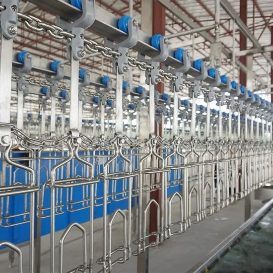 Slaughter House Slaughterhouse Equipment and Tools Halal Abattoir Line Broiler Chicken Poultry Slaughter Equipment Machine Price