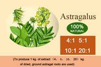 Customized Astragalus Extract According to Customer Requirements