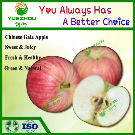 Good Taste Red Apple Fresh Gala Apple From China
