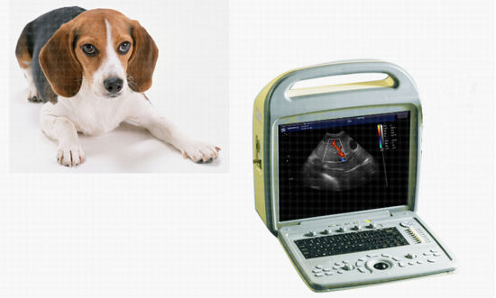 Animal Portable Color Doppler Ultrasound Scanner pictures & photos
