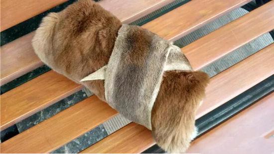 Australia Grey Kangaroo Skin As Home Carpet Floor Rugs