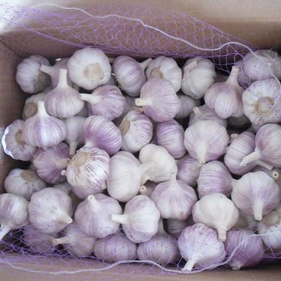 New Crop High Quality Chinese Garlic pictures & photos