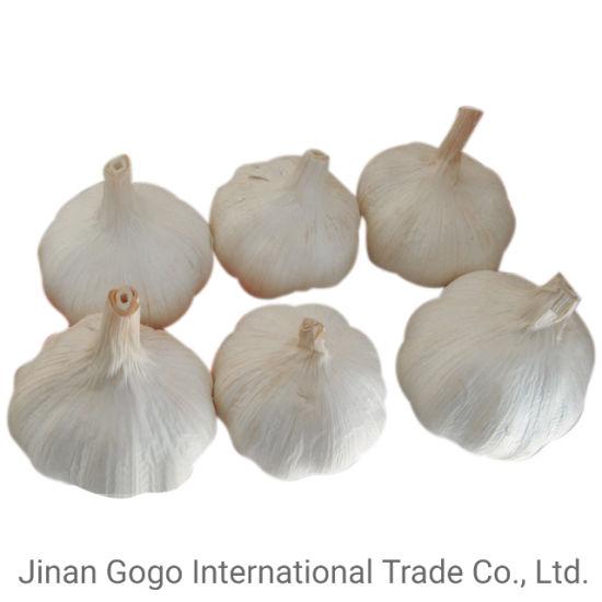 New Crop Chinese Fresh White Garlic