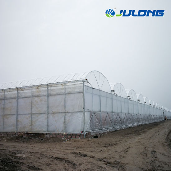 Commercial Large Size Polytunnel Plastic Large Tunnel Dome Greenhouse