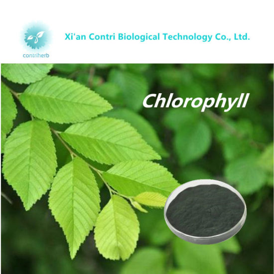 Pigment Sodium Magnesium Chlorophyllin Powder / Mulberry Leaf Extract Powder pictures & photos