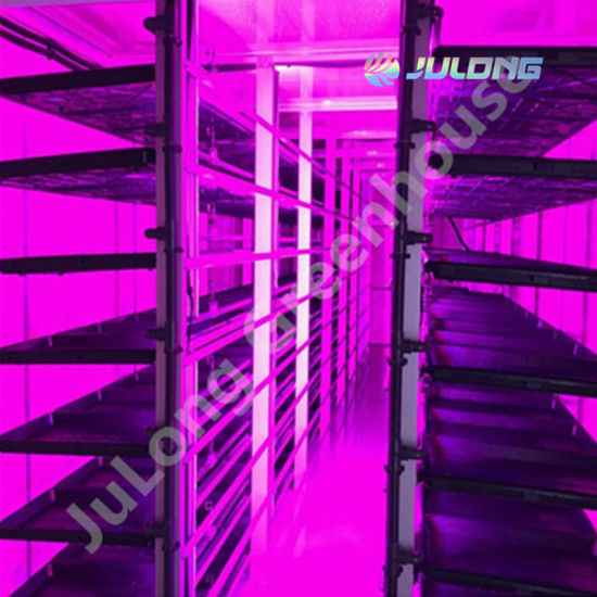 Hydroponic Farm Container Plant Factory Greenhouse for Fresh Lettuce Green Vegetable