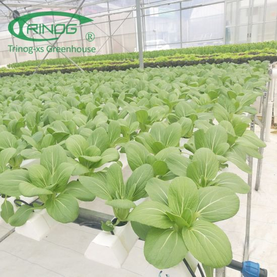 Completed NFT lettuce hydroponics solution for sale