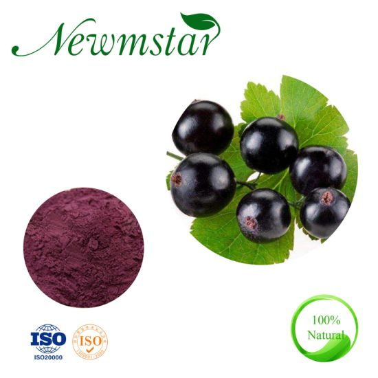 Top Grade 25% Anthocyanidins Organic Black Currant Extract Powder, ISO Certification Factory