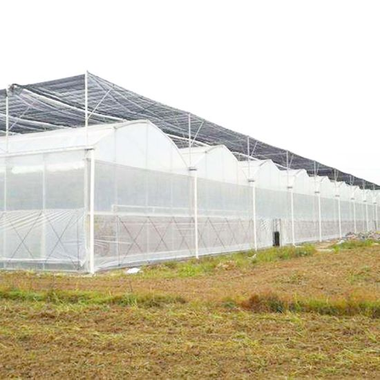 Plastic Film Blackout Greenhouse for Medical Plant