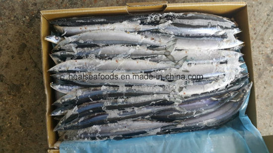 Chinese Best Quality Pacific Saury/Saury Mackerel for Bait pictures & photos