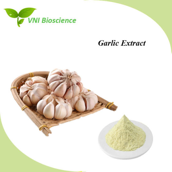 Pure Natural ISO SGS Certified Garlic Plant Extract with Anti-Cancer Effects