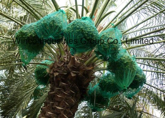 80X100cm, 70X90cm Green Mono Filament HDPE Date Palm Mesh Net Bag for Date Cover