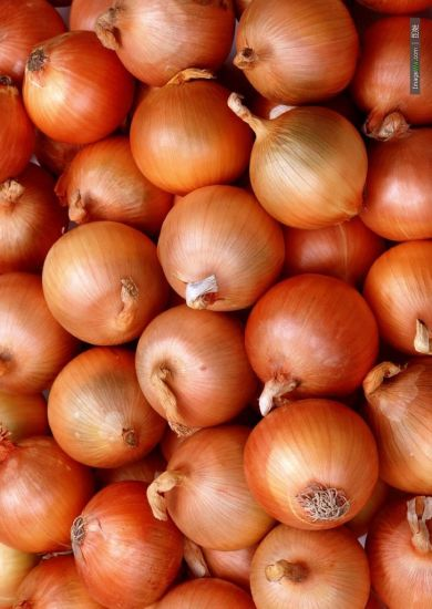 Export Good Quality Fresh Chinese Yellow Onion pictures & photos